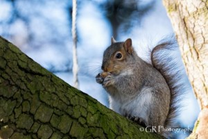 East Park Squirrels